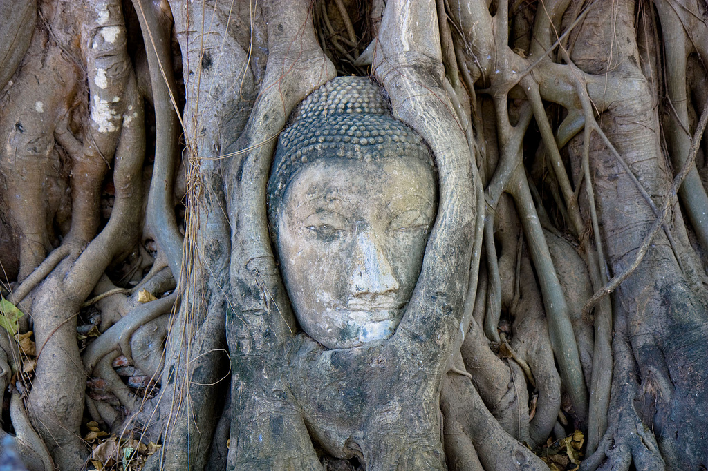 Ayutthaya Buddha Head, Thailand. photo credit: IMG_7886 via photopin (license)