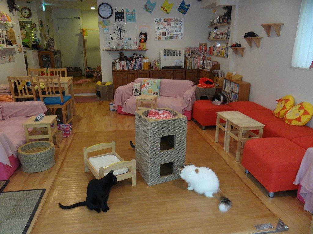 Calico Cat Cafe, Shinjuku