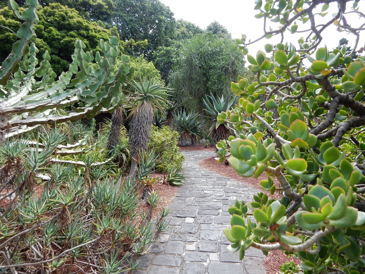 While in the Botanical Garden make sure to walk through some of the special gardens like the beautiful Succulent Garden