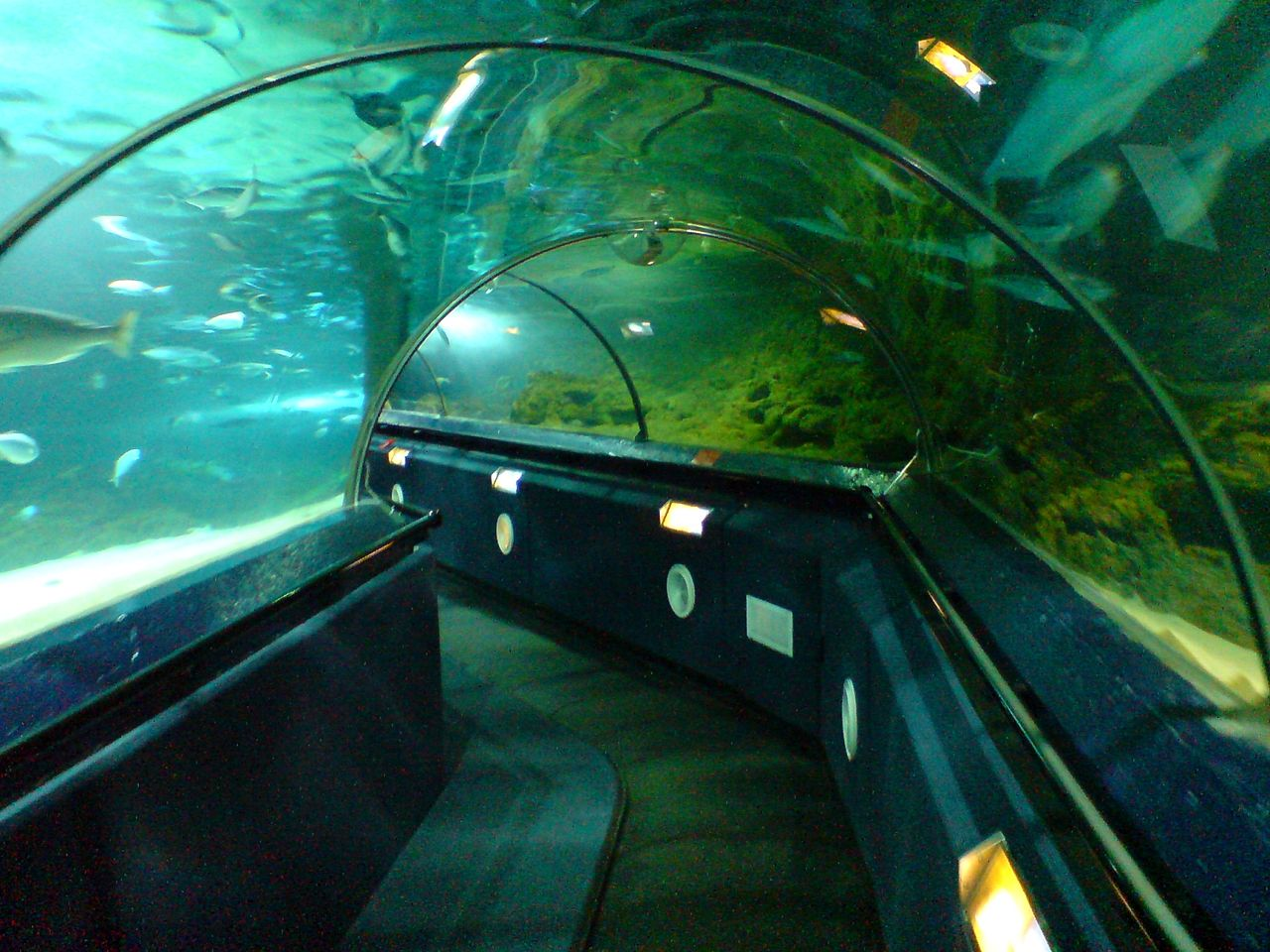 Visitors get view the marine life through long acrylic tunnels.