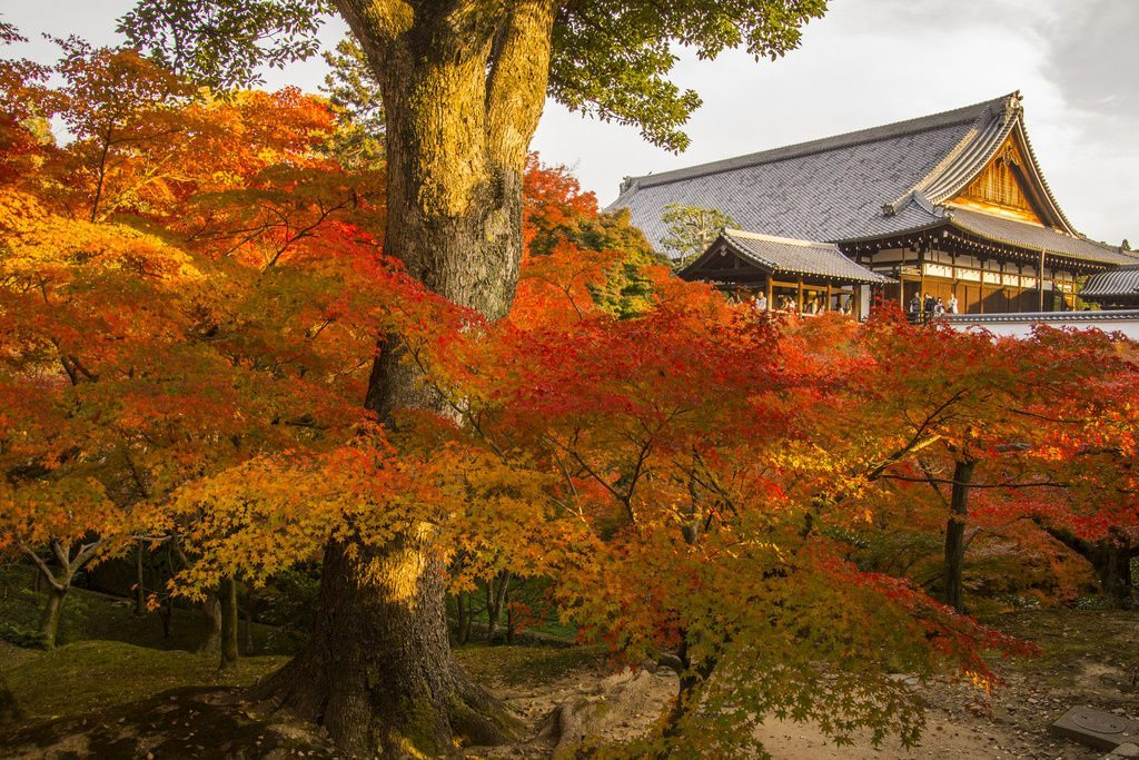 In autumn, Tofukuji's garden is a must visit tourist destination. photo credit: 東福寺の紅葉 / Autumn Leaves at Tofuku-ji Temple via photopin (license)