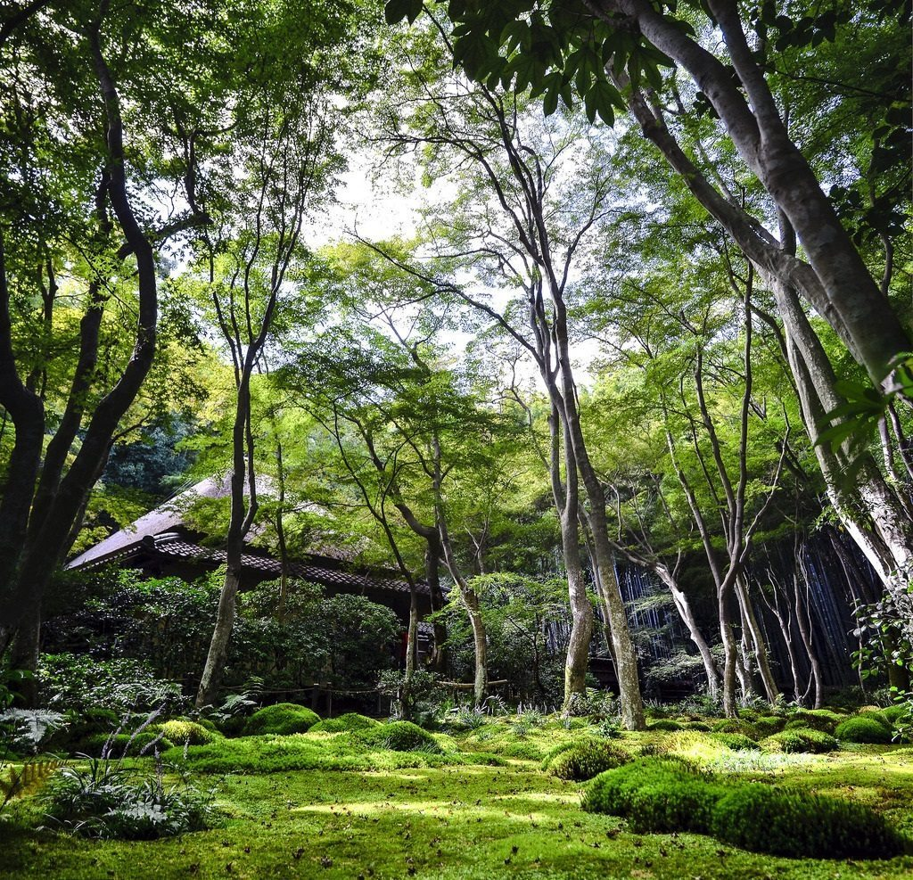 Giou-ji is a very small temple with the most beautiful moss garden. photo credit: Giou-ji 祇王寺 via photopin (license)