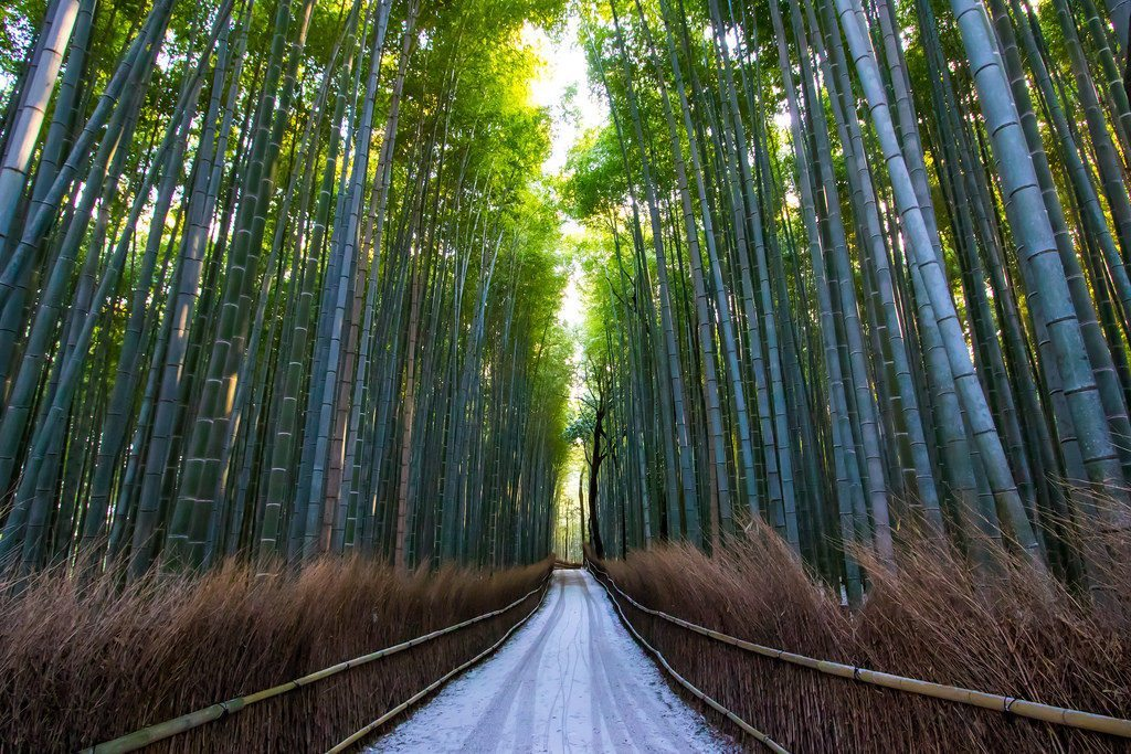The Bamboo Grove in Arashiyama. photo credit: Bamboo grove via photopin (license)
