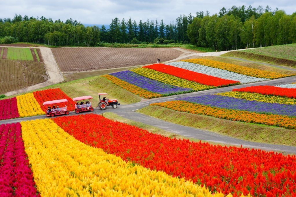 Beautiful flower plantations in Hakkaido. Picture from Pixabay